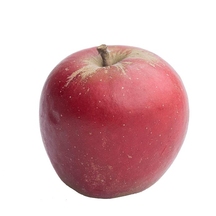 Æble - Holsteiner Cox