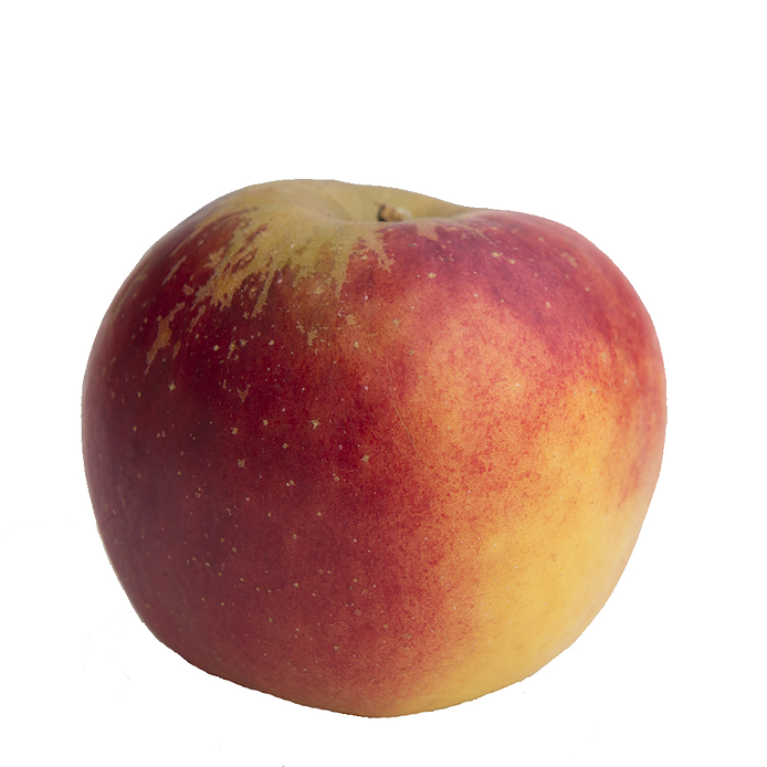 Æble - Rajka
