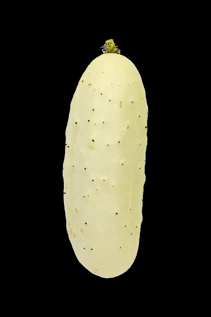 Agurk (Salt n' Pepper)