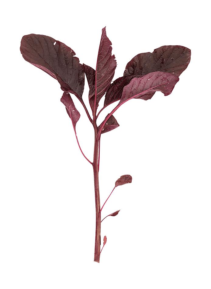 Blad-amaranth