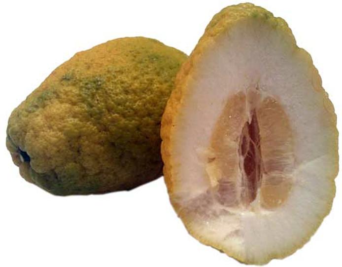 Cedro-citron