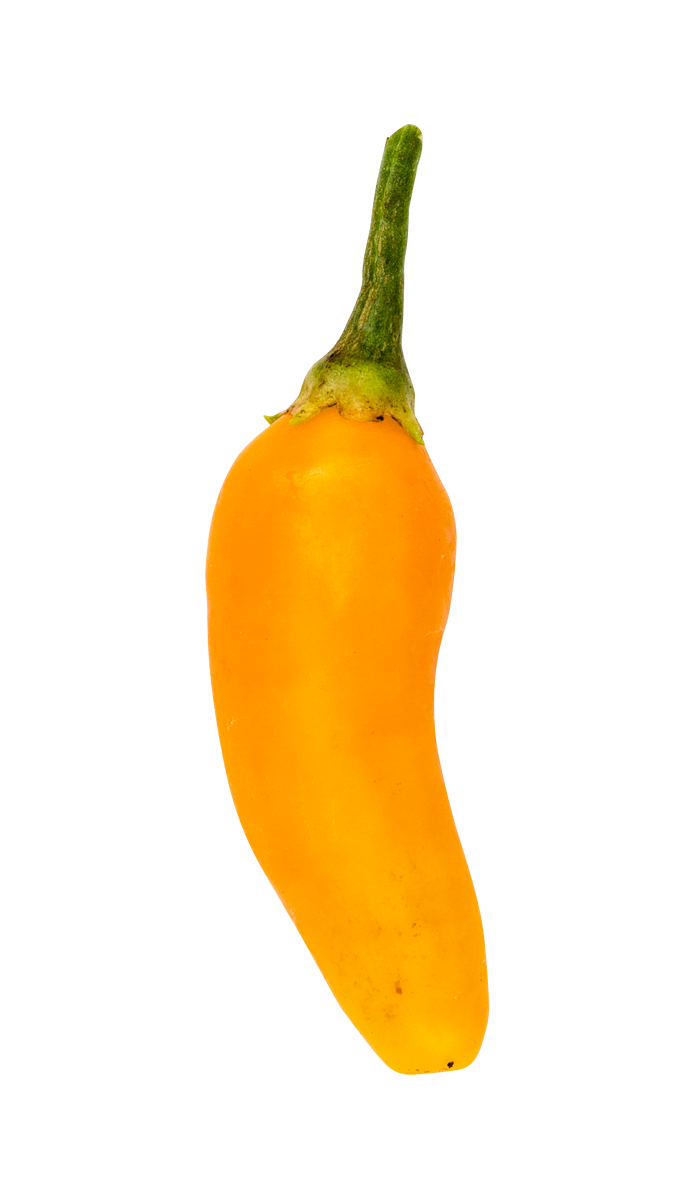 Chili (Aji amarillo)