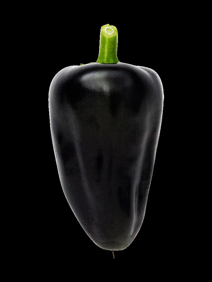 Chili (Hungarian Black)