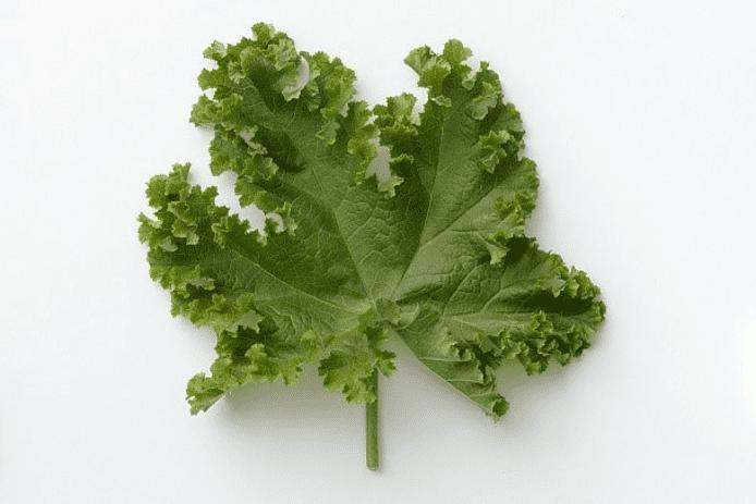 Kinesisk grøntsagsmalva