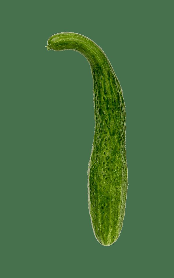 Kinesisk slangeagurk