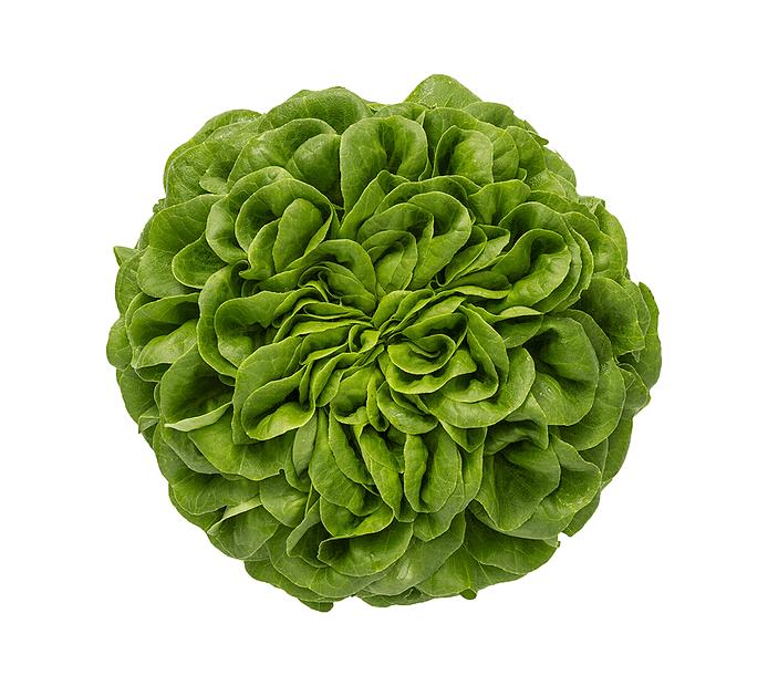 Salanova-salat