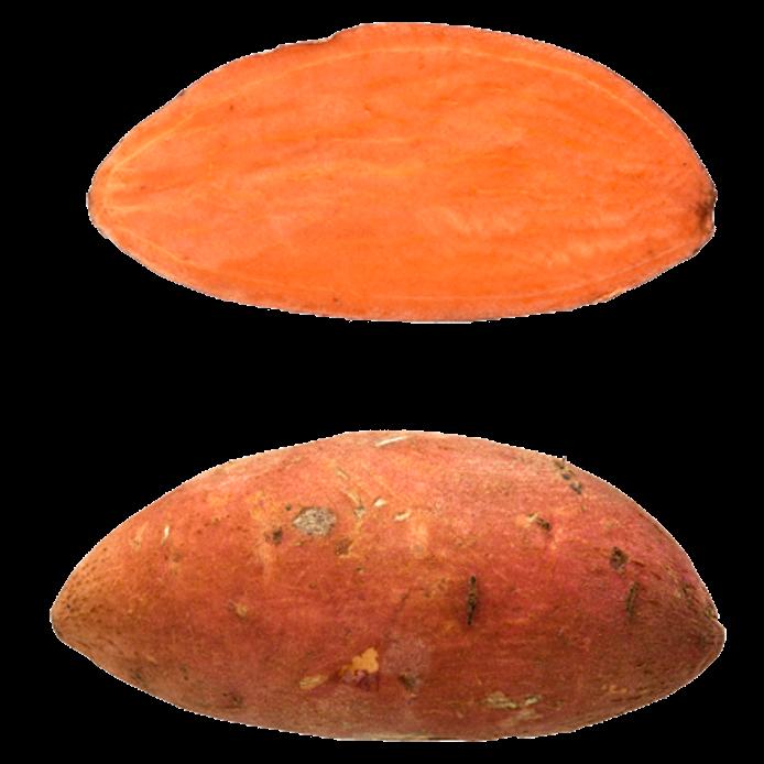 Sød kartoffel