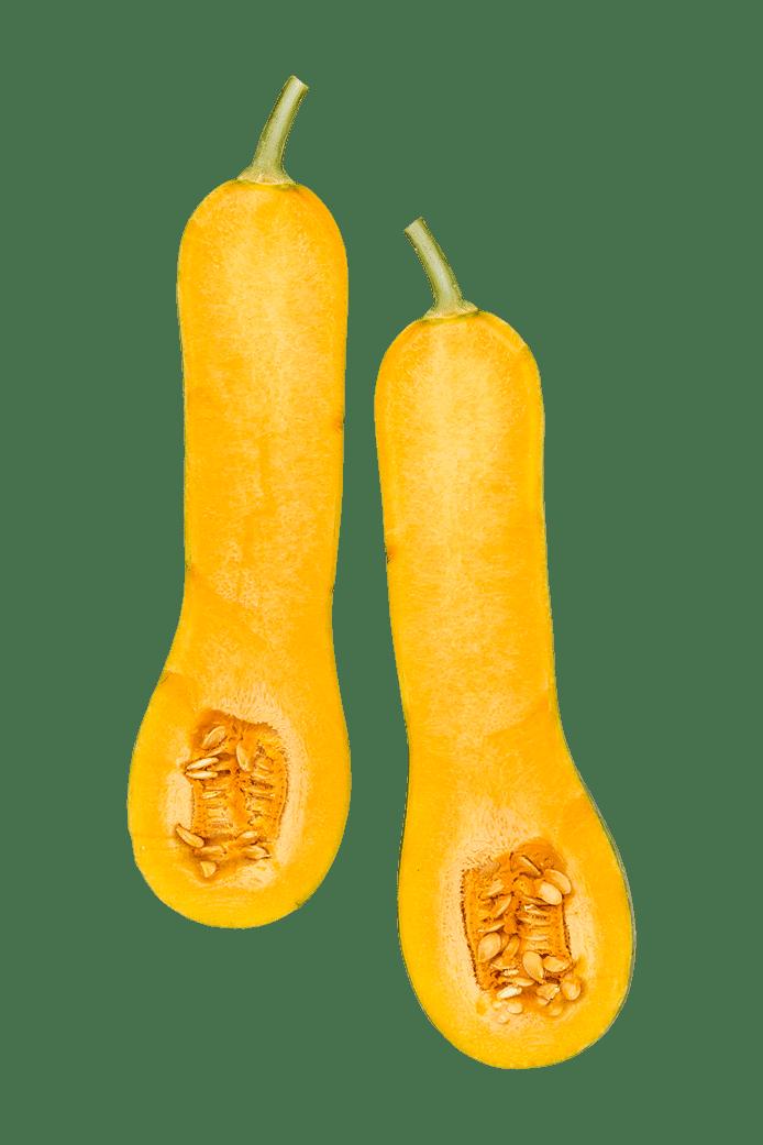 Squash/Græskar (Langer von Neapel)