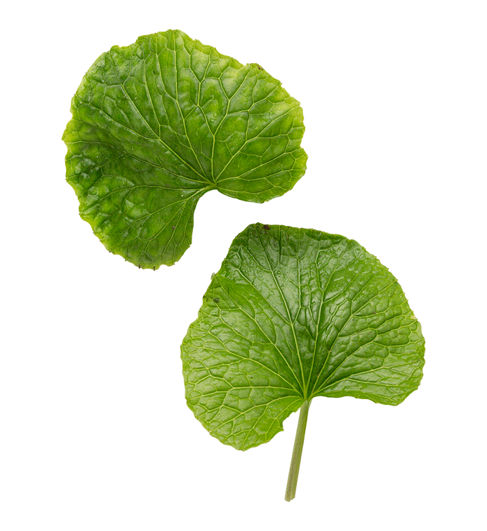 Wasabi (wasabiblade)