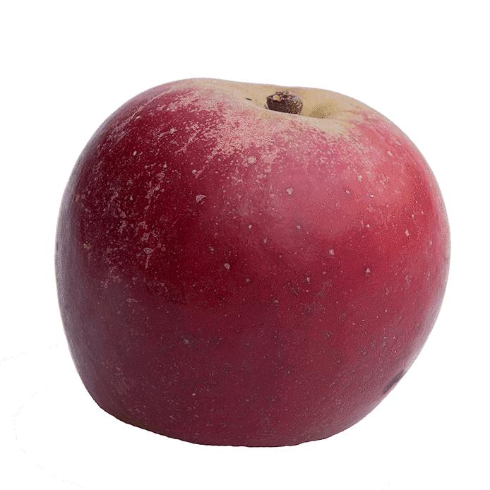 Äpple (Elise)