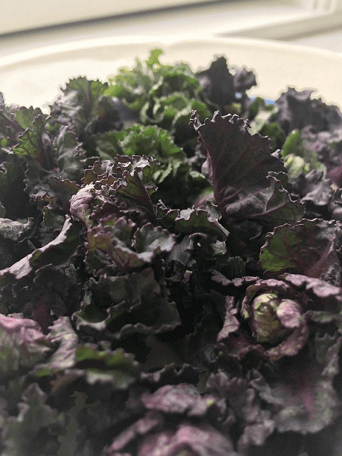 Rosettkål (flower sprouts)