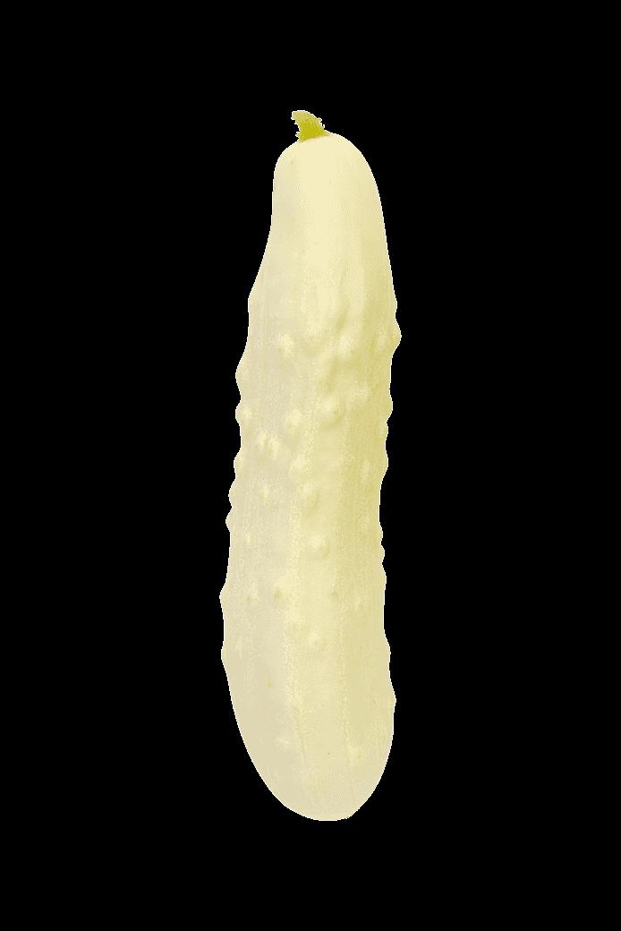 Gurka (Long white)