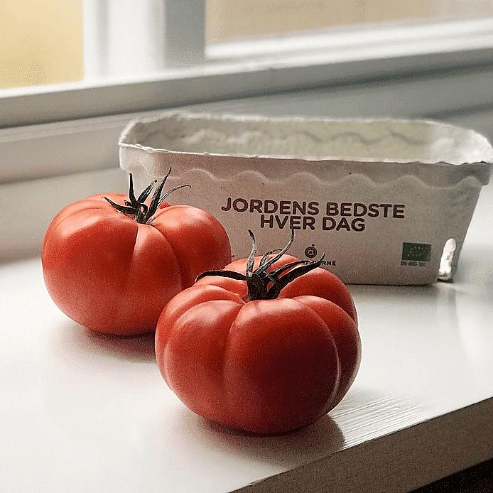 Tomat (Rebellion)