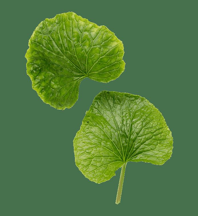 Wasabi (wasabiblad)