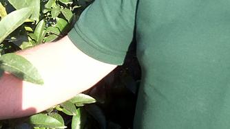 Ginés og hans grapefrugt