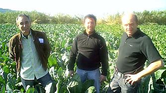 Paco og hans fætter Antonio dyrker Romanesco-kål i vintersolen