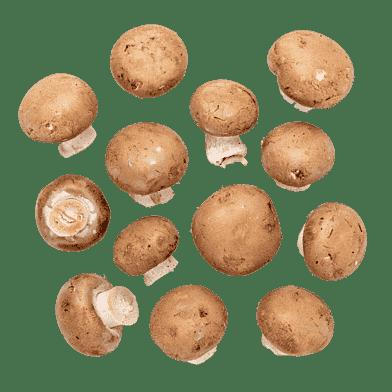 Brune champignon