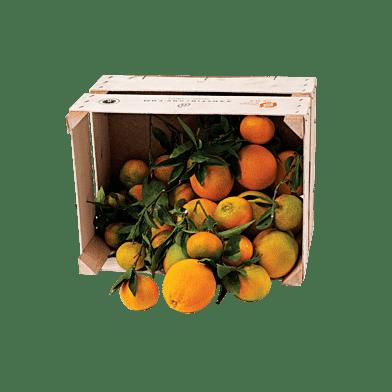 CitrusLådan