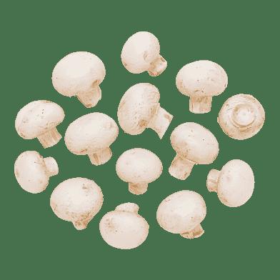 Hvide champignon