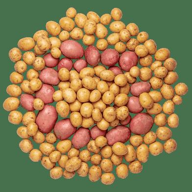 KartoffelKassen