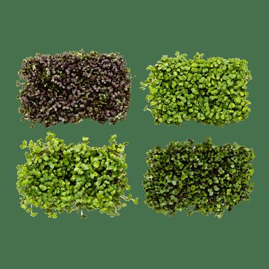 Mikrogröntlådan
