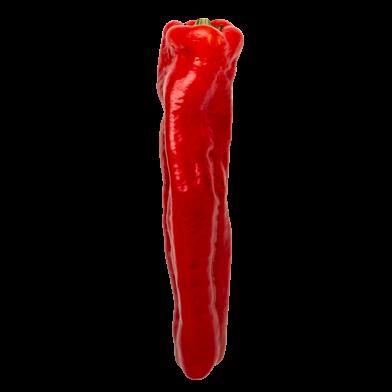 Rød palermo-peberfrugt