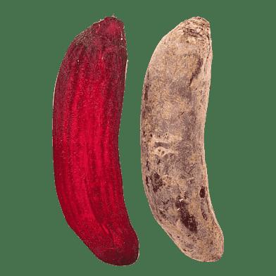 Rødbeder, lange