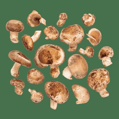 Shiitake-svampe