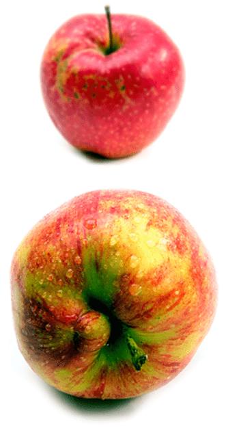 Äpplen, lök, chili och kyckling