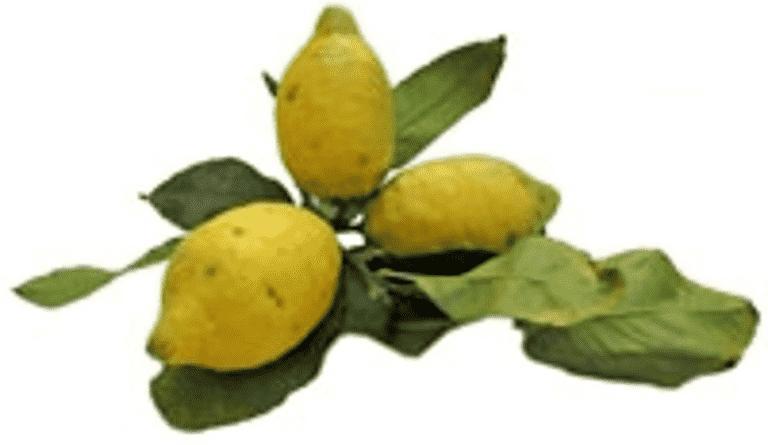 Citronpotatis
