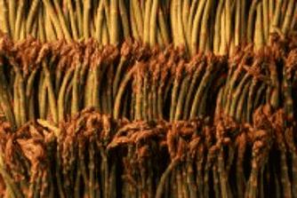 Kokt sparris med basilika
