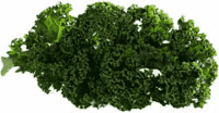 Stuvad grönkål