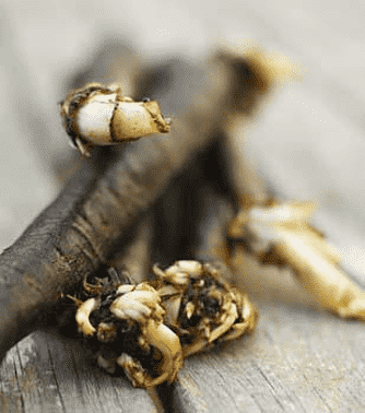 Svartrot med svamp och krasse